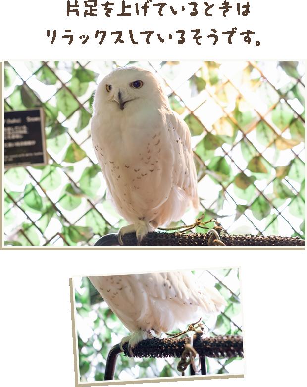 象徴 フクロウ 妙見信仰と結びついた、知恵の象徴「フクロウ」『神々の意思を伝える動物たち 〜神使・眷属の世界(第二十回)』