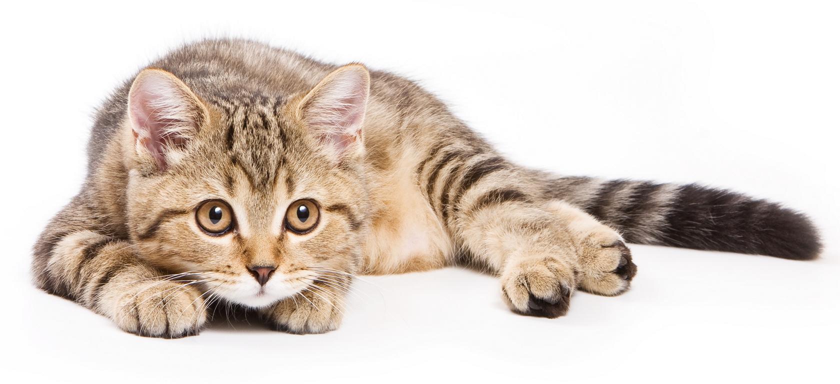 腎 不全 の 猫