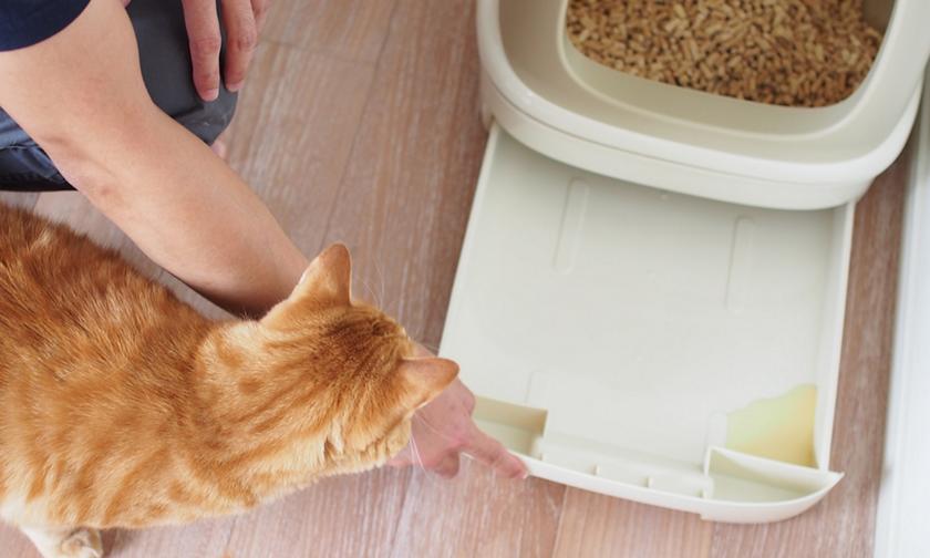 マーキング 防止 猫 猫が来なくなる方法とは?庭の猫よけ・糞尿被害対策 [猫]