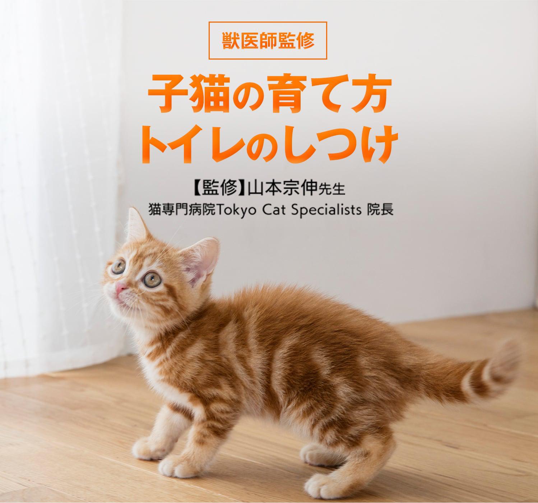 噛む しつけ 猫