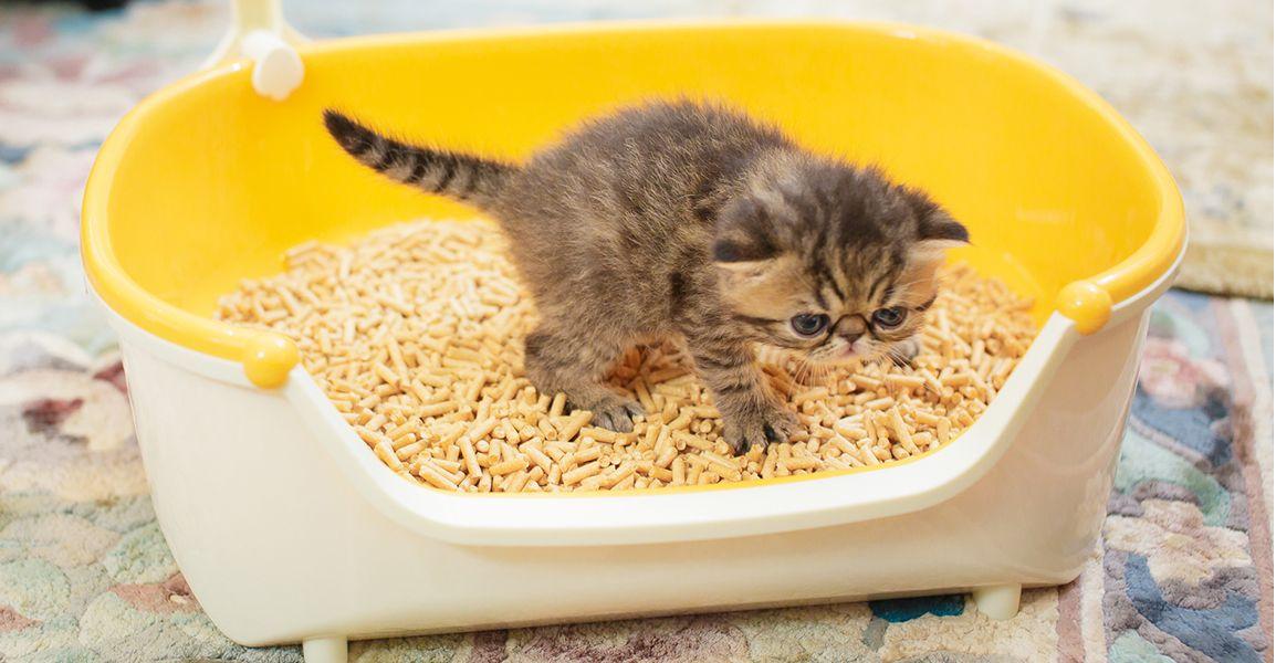 子猫の育て方トイレのしつけニャンとも清潔トイレ 猫用システム