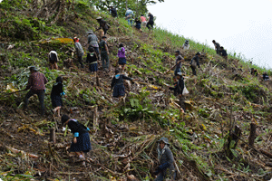 Thai Kao employees participating in reforestation activities
