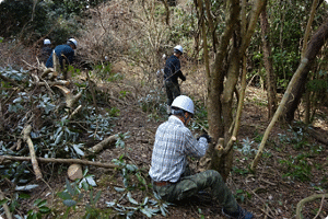 Employees thinning small trees (Kao Forest Oishi)